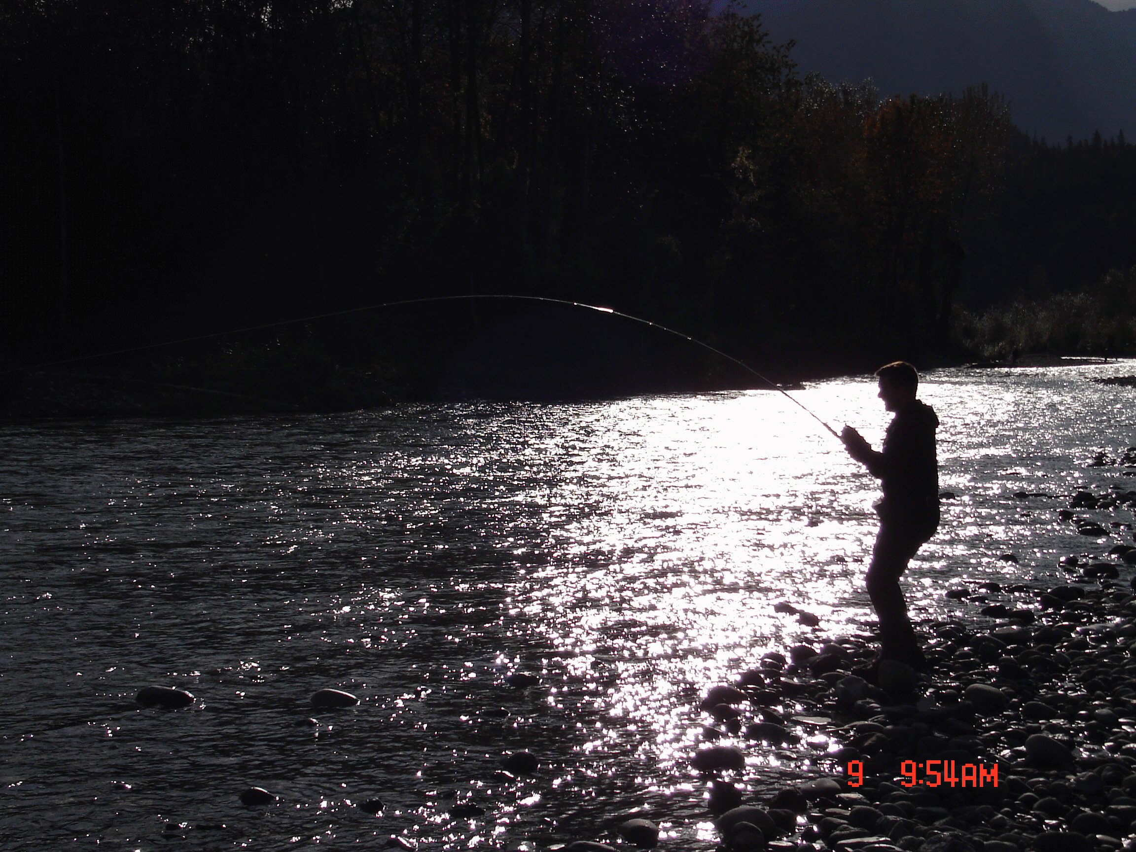 Chum Salmon fishing on the Vedder river in Chilliwack British Columbia