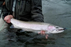 photo-2006-steelhead7