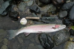 photo-fraser_valley-steelhead10
