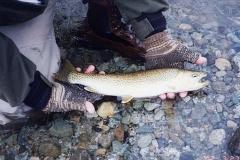 trout_cutt12