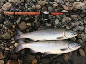 bottom bouncing for salmon